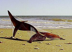 eolic harp stranded whale